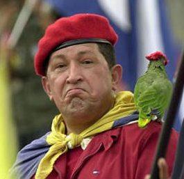 Chavez parrot